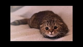 Cute Dogs and Cats Video Vines    FunnyVines