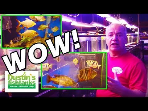 Best Aquarium Store In Ohio, Gerber's Tropical Fish Store, Part One Freshwater