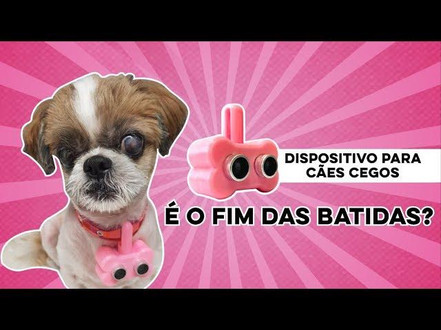 BLINDOG - CÃO CEGO ANDANDO SEM BATER!