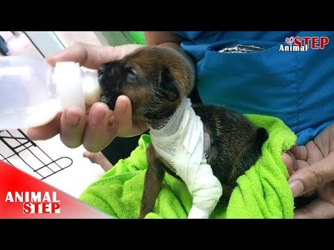 Little Puppy Saved from Severely Injured