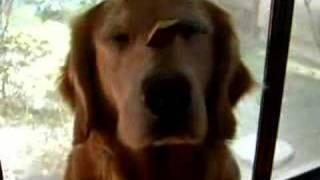 アヴリールが、鼻にのせて「待て」をしているのに 横からトッティが、横...