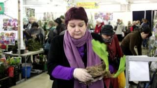 видео Цветы, растения, семена в Санкт-Петербурге
