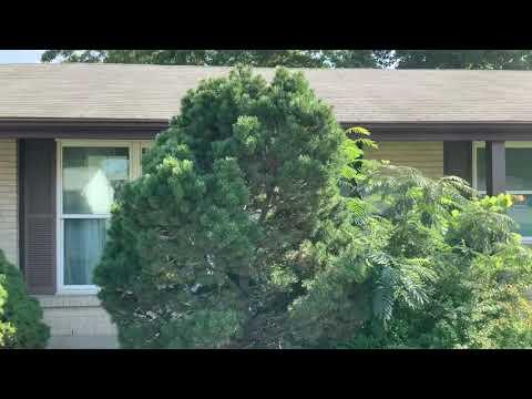 12052 Charleston Maryland Heights We buy inherited homes
