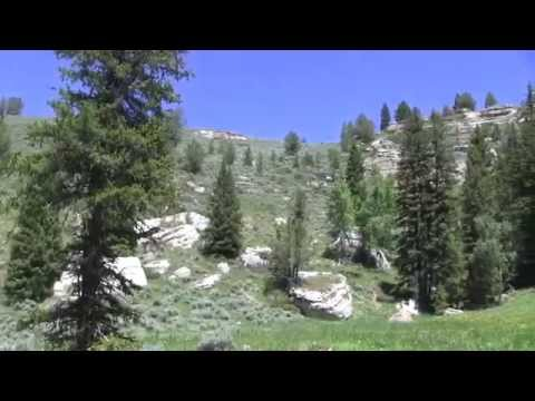 Fish Whispering episode 5, Native Cutthroat in the Bighorns!