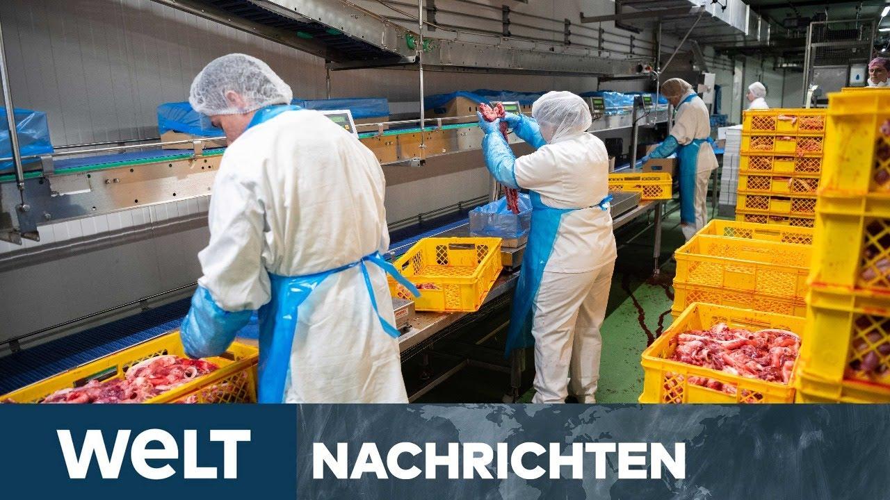 CORONAVIRUS: 657 Tönnies-Mitarbeiter mit Corona infiziert -Kritik an Fleischindustrie
