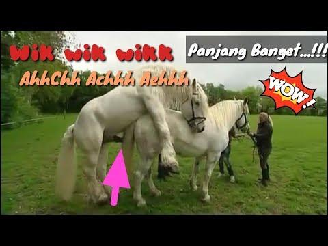 Lagu WIK Wik WiK Sodokan Kuda Kawin