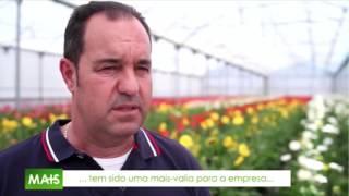 [RTP1] Mais Emprego na Florineve - Manuel Freire