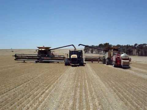 Harvest Glenvar 2007 - Wheat Australia big lexion