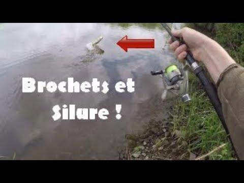 Brochet Et Silure Au Vif | Une Peche De Folie !