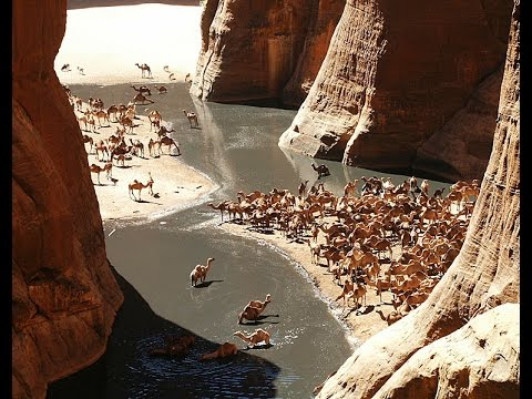 World's Famous Guelta in the Sahara Desrt, The Guelta d'Archei