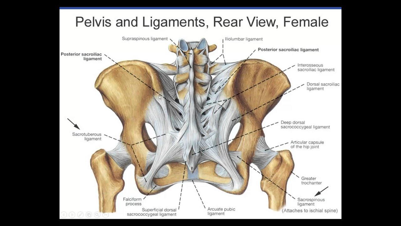 Pelvic Fractures 1 - YouTube