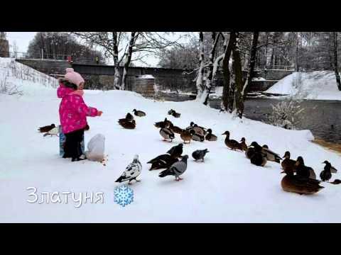 видео про голубей