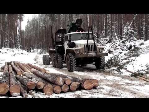 Один день из жизни лесоруба работа бензопилой