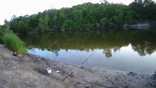 РЫБАЛКА - FISHING на донку крокодил. Вечерний улов!  30 05 2020