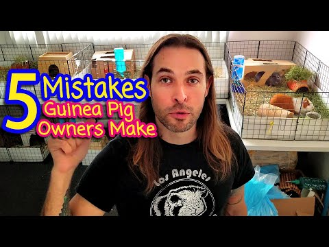 5 MISTAKES Guinea Pig Owners Make!