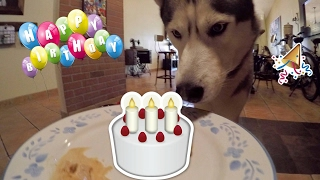 My Husky's 4th Birthday!!