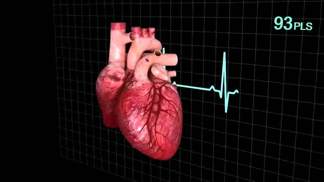 Animated human heart - photo#33