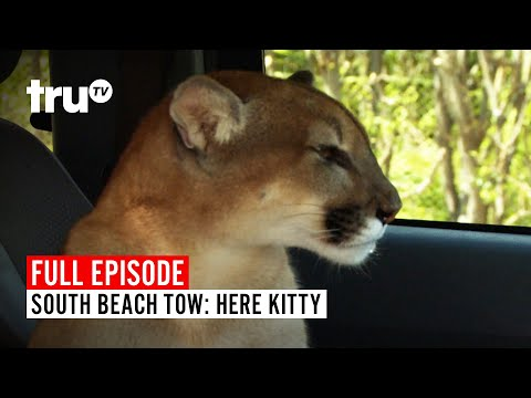 South Beach Tow | Season 5: Here Kitty | Watch the Full Episode | truTV