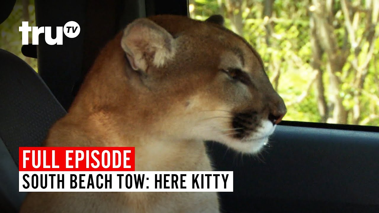 Download South Beach Tow | Season 5: Here Kitty | Watch the Full Episode | truTV