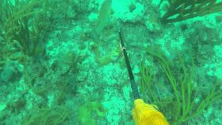 Obseasion Fishing Team July In The Bahamas. Mahi Fishing And Spearfishing Hogs !