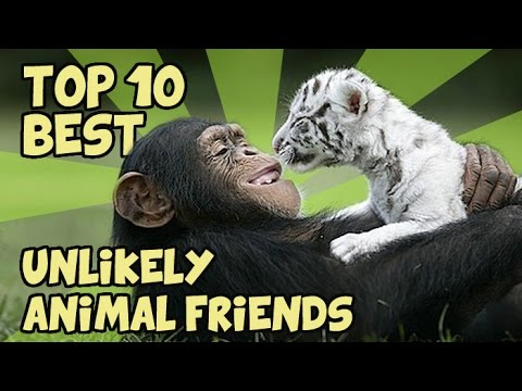 TOP 10 UNLIKELY ANIMAL FRIENDS