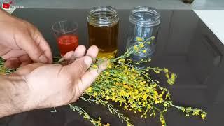 Kantaron Yağı Nasıl Yapılır.(Organik)Centaury Oil How-To (Organic)