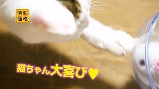 【ねこ】ボールランナーマウス2【大喜び】