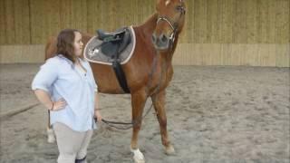 Mon amour de cheval ♥