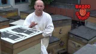Условия быстрого развития пчелосемьи