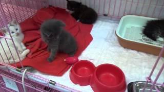 Маленькие котята ищут родной дом