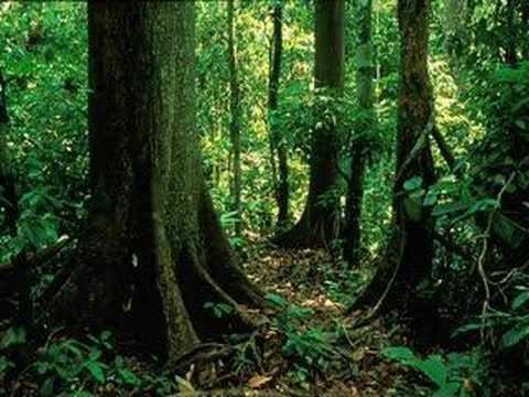 Rainforest Sound