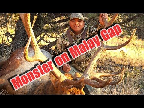 San Carlos Elk January Malay Gap Part.2