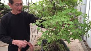 Creating a maple bonsai tree in 20 mins EASY!