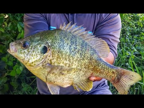 World Record Sunfish?