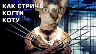 Как правильно стричь когти коту
