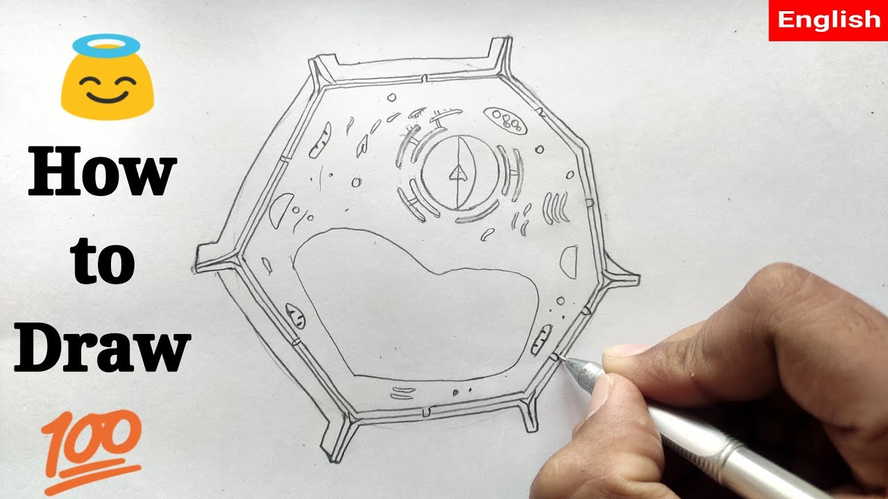 How to draw Plant cell ! @Fine Arts Guruji - YouTube