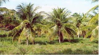 Curso Cultivo Orgânico de Coco - Cursos CPT