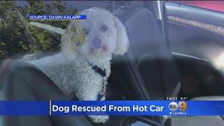 Good Samaritan Helps Rescue Dog Caught In Hot Car