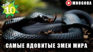 САМЫЕ ЯДОВИТЫЕ ЗМЕИ МИРА   РЕЙТИНГ TOП-10