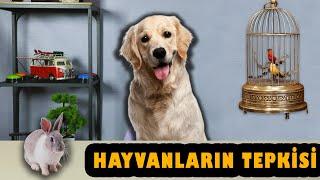 HAYVANLARIN TEPKİSİ!