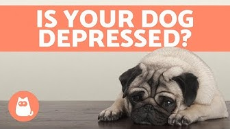 hqdefault - How To Help Depression In Dogs