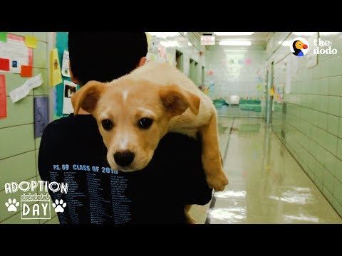 download Rescue Puppy Brings Her Family So Much Joy | The Dodo Adoption Day