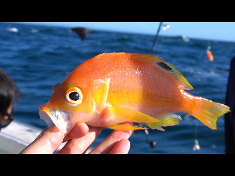 Deep Sea Fishing Sydney Offshore! Many New Unusual Species Caught!