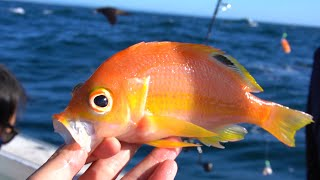 Deep Sea Fishing Sydney Offshore Many New Unusual Species Caught