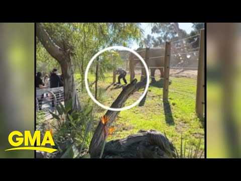 Dad arrested after sneaking toddler into elephant enclosure at zoo l GMA