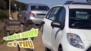 Thế Giới Động Vật | Khỉ Đầu Chó Bắt Cóc Trẻ Em