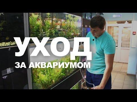 Как чистить аквариум | Типичные ошибки новичков