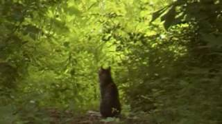 Panther/ Mountain Lion Video in West Virginia