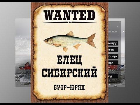 Ловим мутантов в РР3. Елец сибирский.