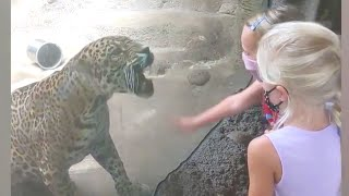 Imagine If There Was NO GLASS!  Funny Babies At The Zoo | LIFE FUNNY PETS 🐯🐶